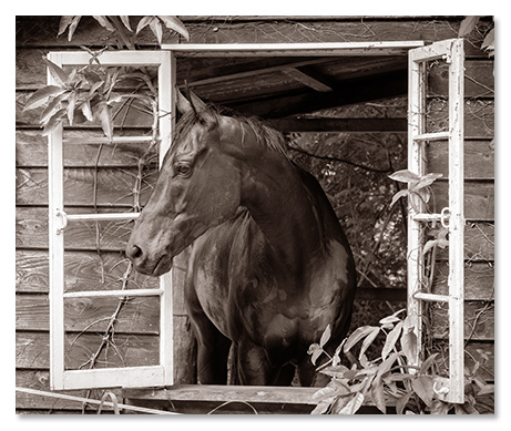 Dominic Chaplin Cairns Horse Photography